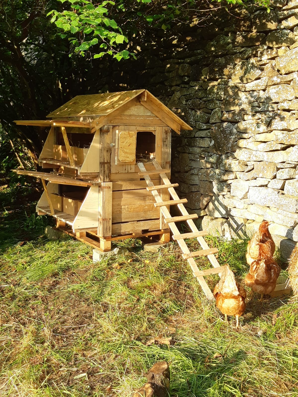 poules-permaculture-amiradou-valence
