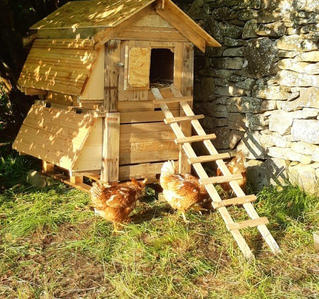 poules-permaculture-amiradou-valence