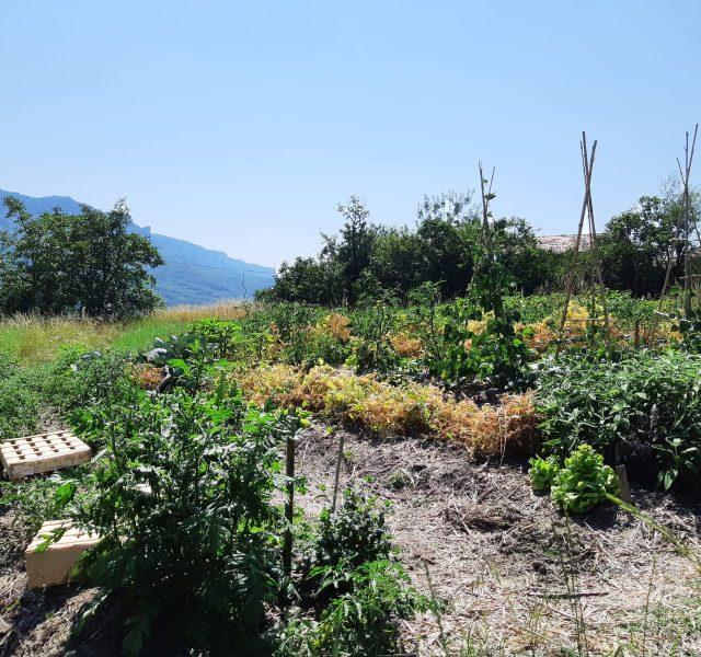 """jardin de permaculture amiradou"""""""